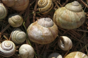 old snail shells