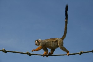 Balance monkey