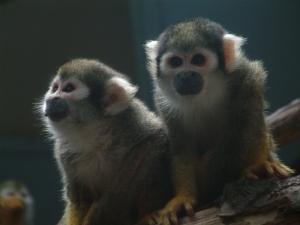 monkeys-not-monkeying-around-1491478