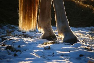 horse-1157932_1920