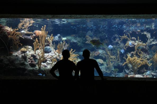 aquarium-1501360_1920