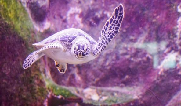 sea-turtle-1229714_1920