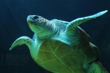 underwater-1283558_1280