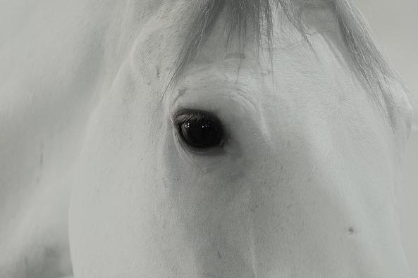 horse-843524_1920