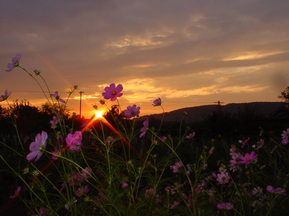dawn-at-the-balaton-1254932
