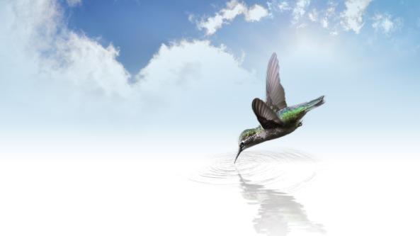 hummingbird-736890_1920