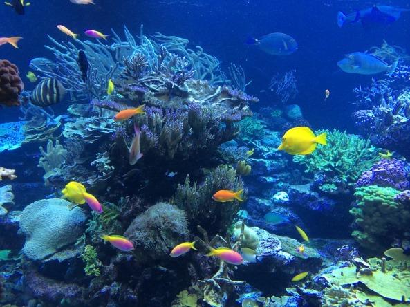 underwater-408904_960_720
