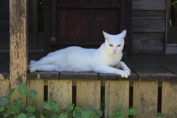 cat-2728430_1920