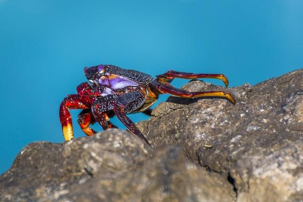 crab-1555584_1920