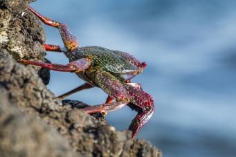 crab-1934088_1920