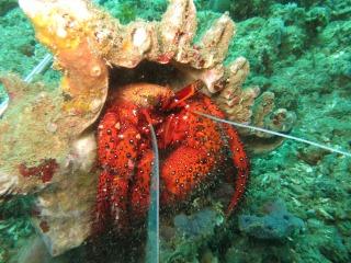hermit-crab-2059152_1920
