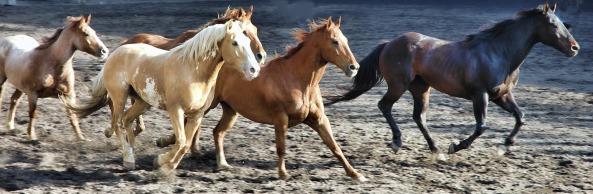 horse-2629042_1920.jpg