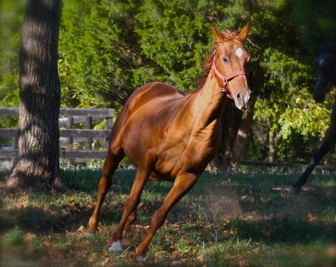 horse-running-1269621_1920.jpg